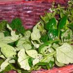 Vælg, hvilke urter du vil have i din pesto.
