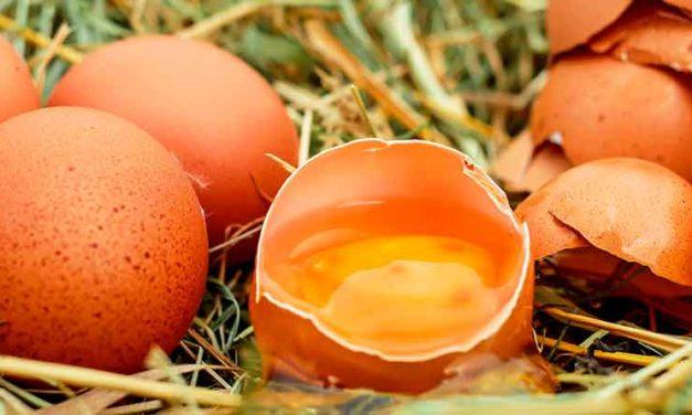 Sådan deler du rå æg